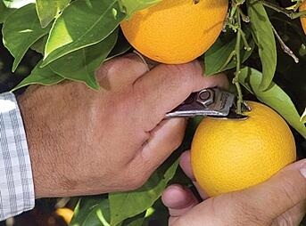 orange_tree-1.jpg