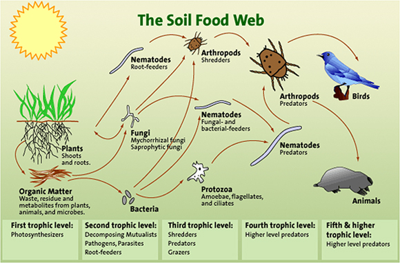 Soil Food Web 7 14 14 resized 600