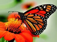 Monarch AHS