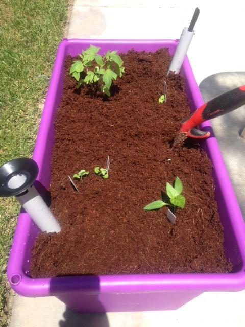 Growums with Corona Trowel