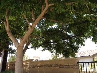 treepic