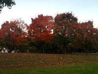 AutumnColor CSabbarese