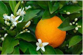 AHS Citrus 11 10 14