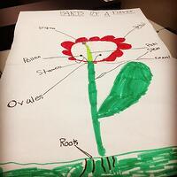 PW-Botany-2-2-15