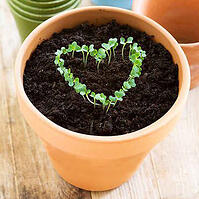 SeedlingsInHeart