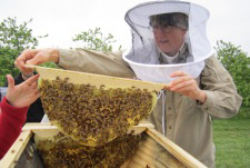 Rodale Institute Honeybee Steward