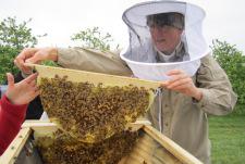 Rodale Institute Honeybee Steward