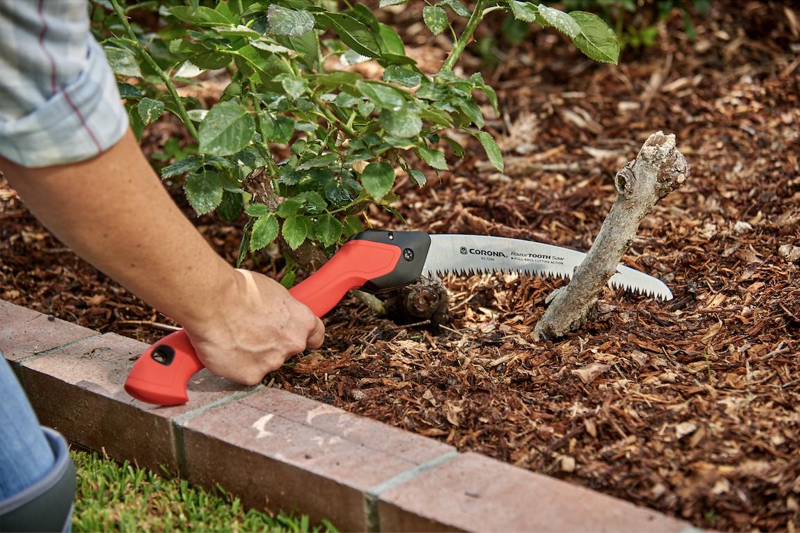 Corona Tools Razortooth saw pruning deadwood on a rose bush