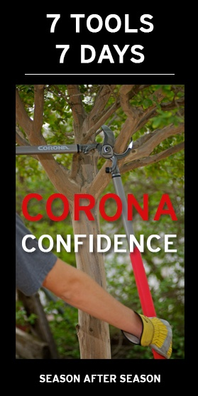 Corona_Confidence.jpg