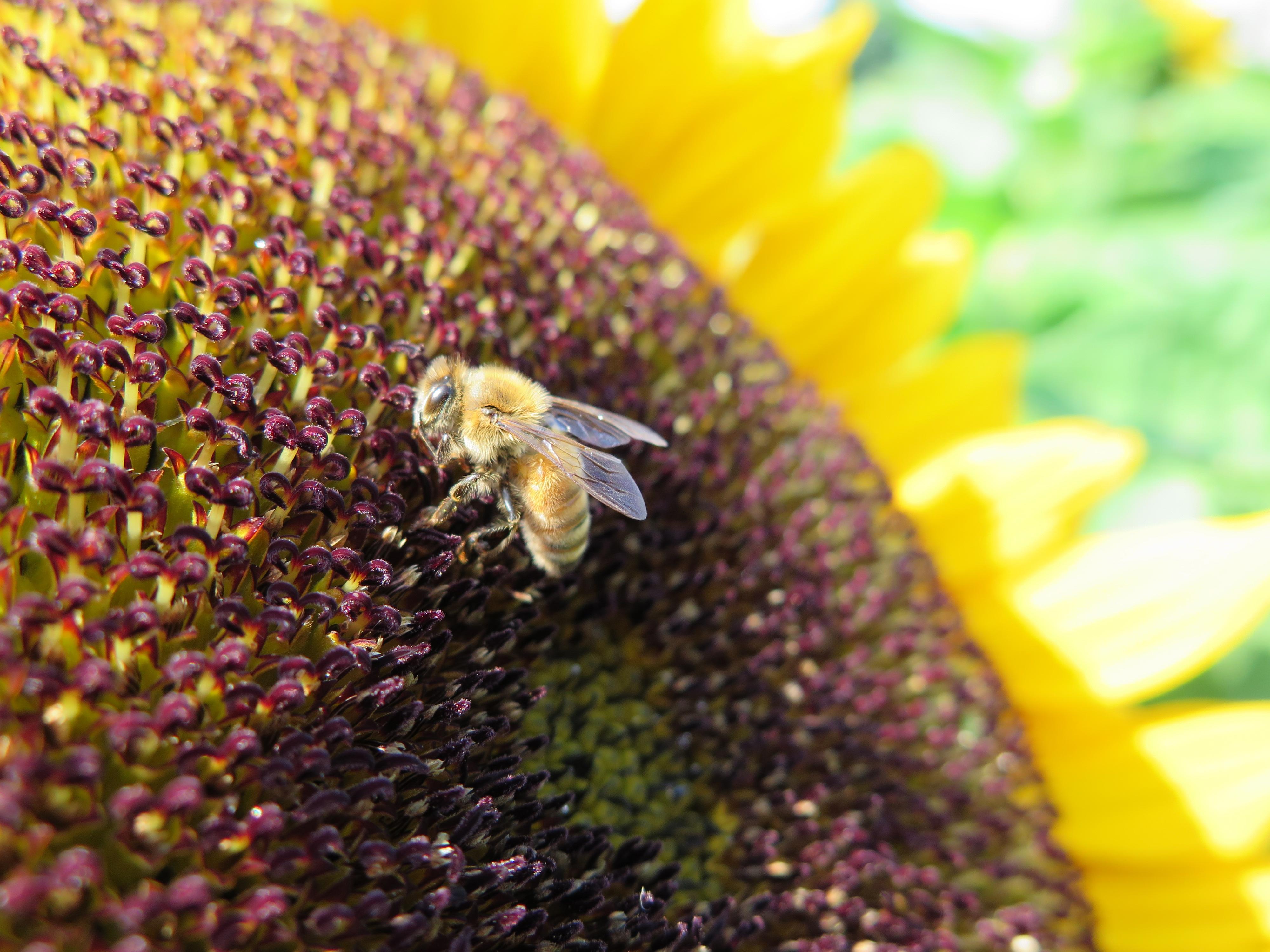 RodaleInstitute-honeybees-4-13-2015
