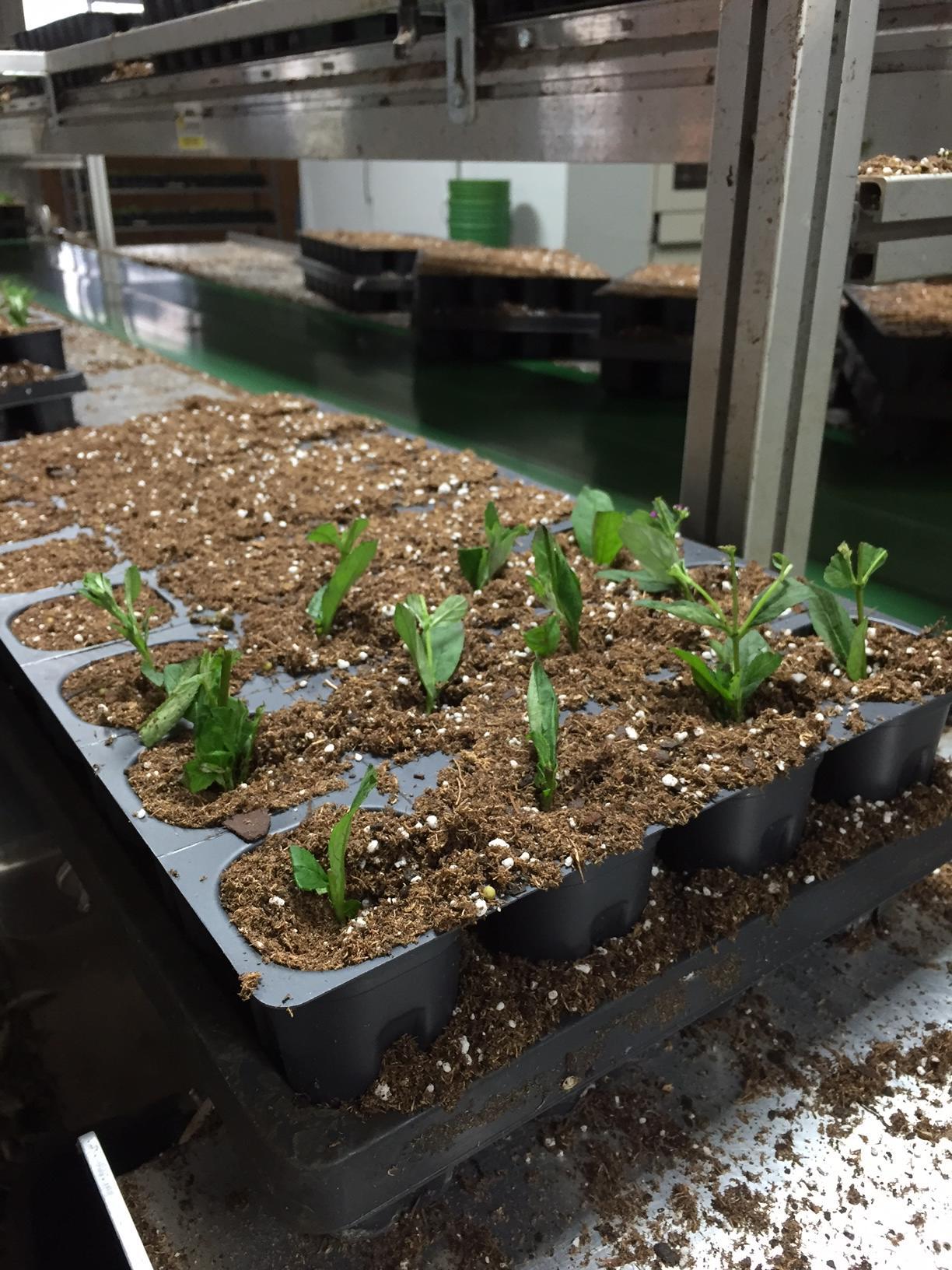 plant_propagation_on_Corona_Tools