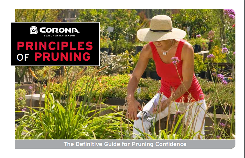 principles_of_pruning_on_Corona_Tools-1.png