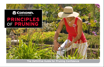 principles_of_pruning_on_Corona_Tools.png