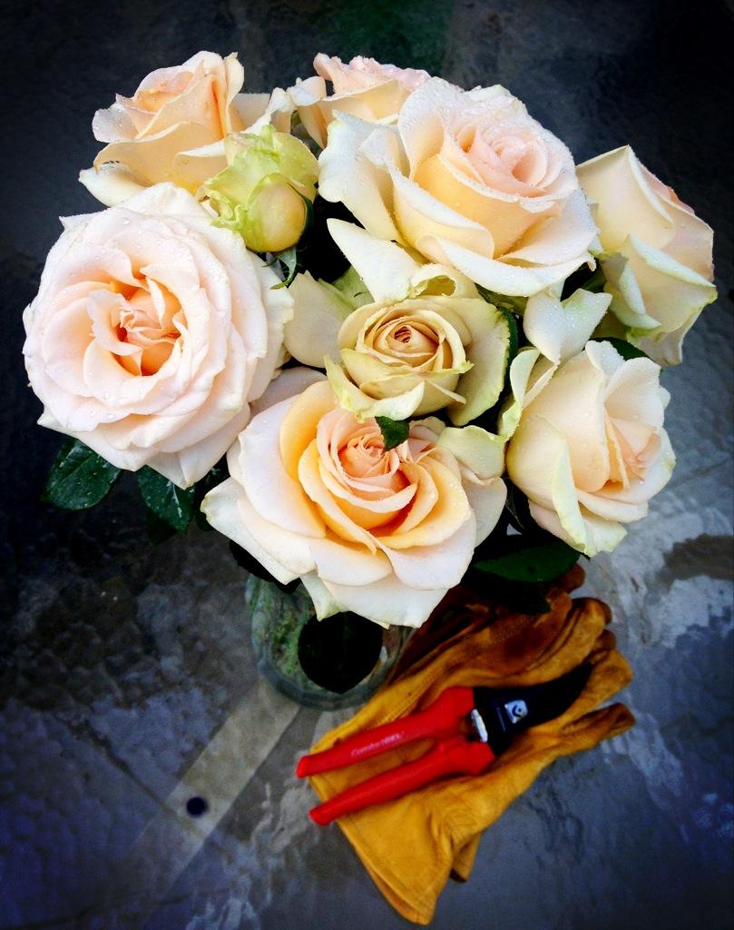 roses_on_Corona_Tools.jpg