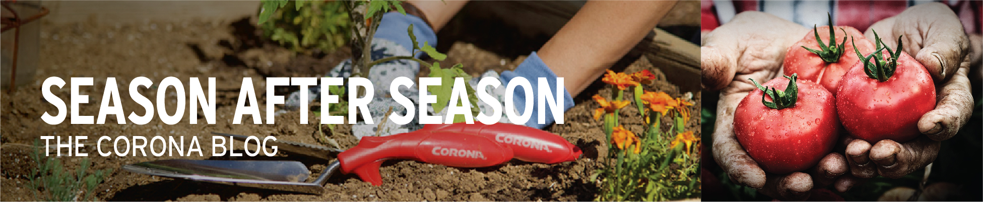 Season After Season: The Corona Blog